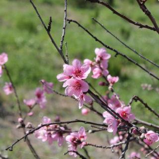 Blühende Pflanzenwelt - Pia Kahlert
