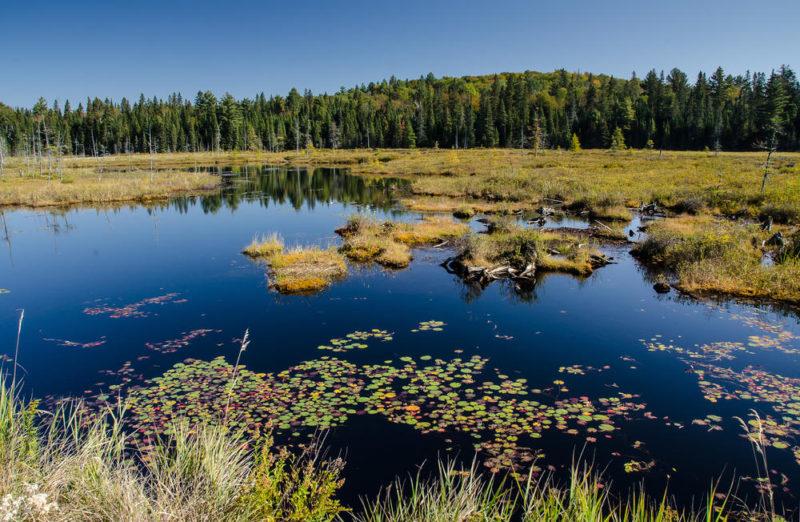 Wanderung zum Mizzy Lake - Susanne Haas