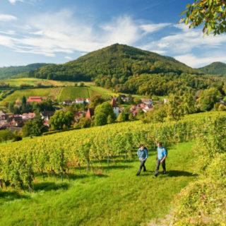 Pfälzer Weinsteig Leinsweiler - Rheinland Pfalz Tourismus GmbH - © Copyright