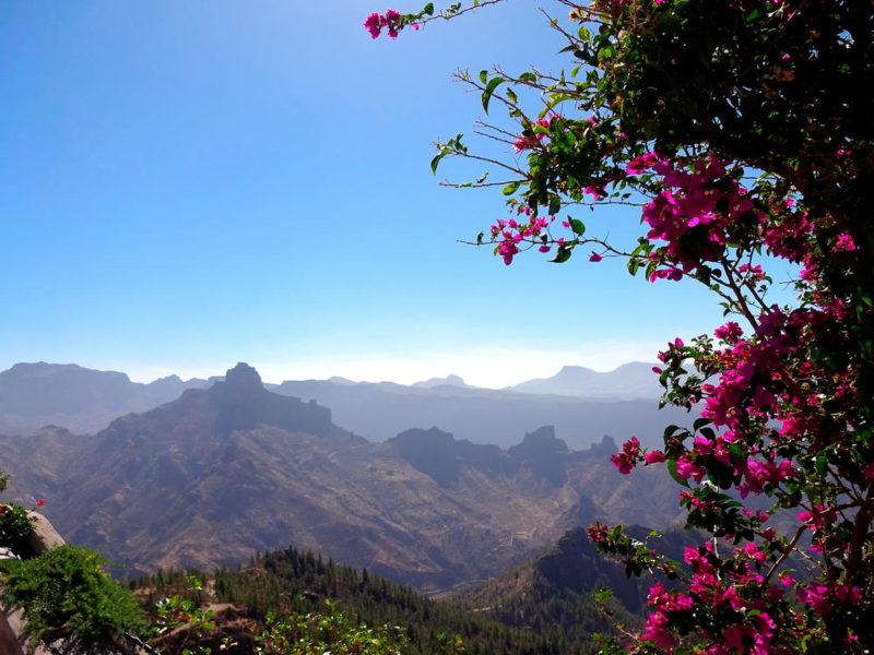 Blütenpracht in Artenara - Dennis Gowitzke