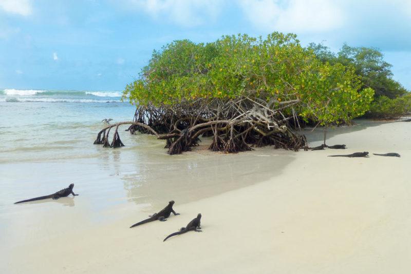 Meeresechsen an der Tortuga Bay - Julia Becker