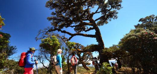 Wanderung zum Mount Victoria - Peter Bartel