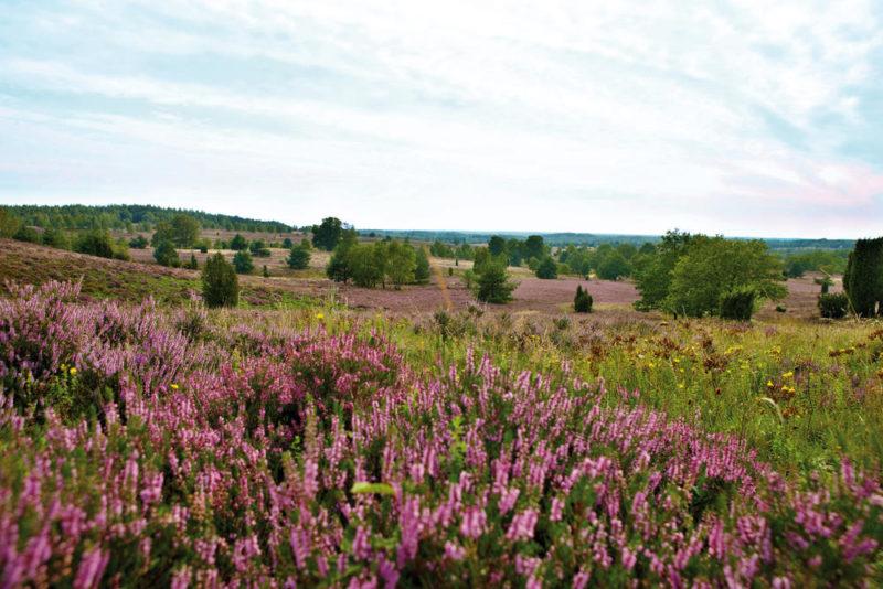 Naturschutzgebiet Lüneburger Heide - LüneburgerHeideGmbH/C.Wyr