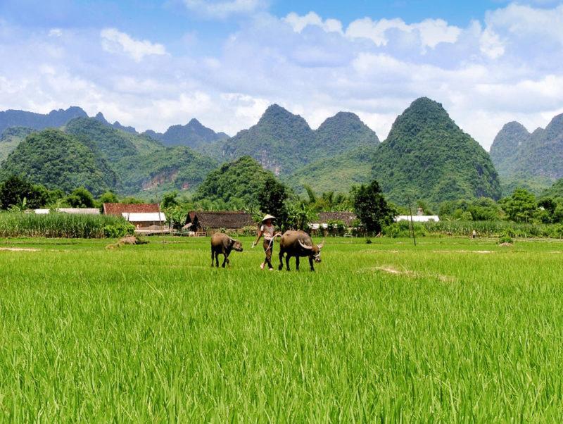 Reisfeld im Norden - Man Hoa