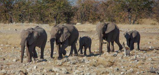Günstige Botswana Gruppenreisen für 18 - 39 jährige 2019 ab € 699.0   Erlebnisrundreisen.de