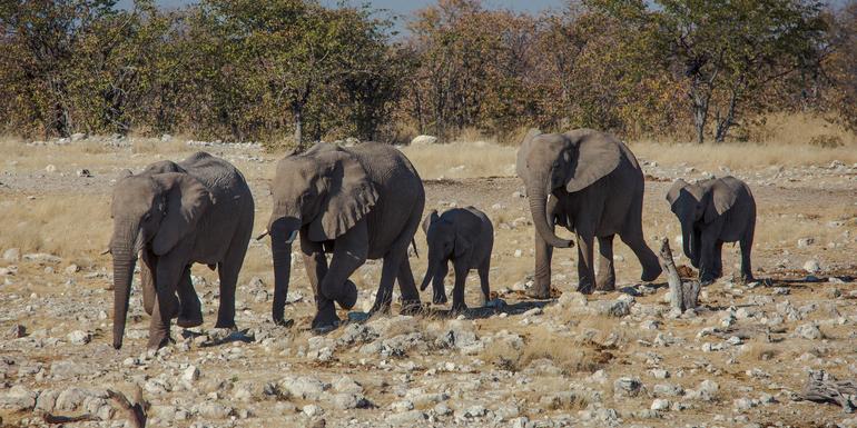 Günstige Botswana Gruppenreisen für 18 - 39 jährige 2019 ab € 699.0 | Erlebnisrundreisen.de