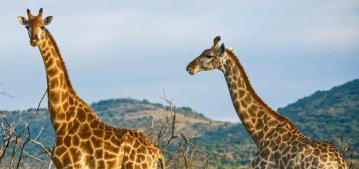 Günstige Kenia Gruppenreisen für 18 - 39 jährige 2019 ab € 749.0 | Erlebnisrundreisen.de