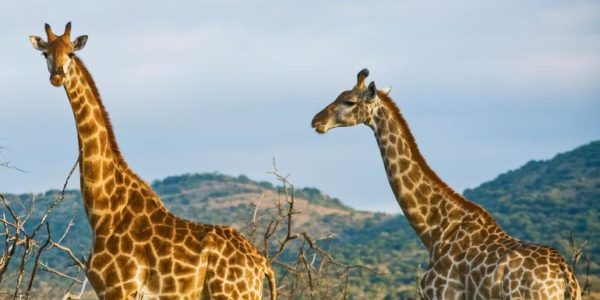 18-to-Thirtysomethings-Kenya-Overland-Adventure
