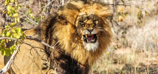 Günstige Simbabwe Gruppenreisen für 18 - 39 jährige 2019 ab € 775.0   Erlebnisrundreisen.de