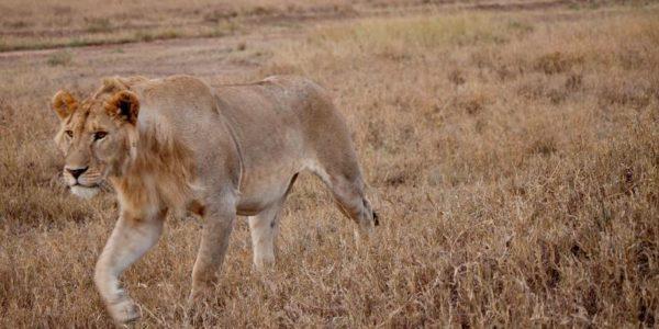 18-to-Thirtysomethings-Serengeti-to-Victoria-Falls-Adventure