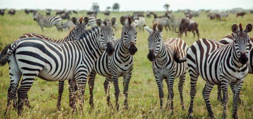 Günstige Botswana Gruppenreisen für 18 - 39 jährige 2019 ab € 1448.0 | Erlebnisrundreisen.de