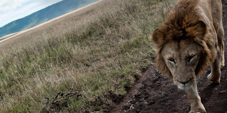 Günstige Tansania Gruppenreisen für 18 - 39 jährige 2019 ab € 1184.0 | Erlebnisrundreisen.de