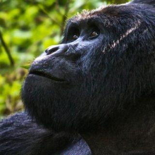 Günstige Uganda Gruppenreisen für 18 - 39 jährige 2019 ab € 1818.0 | Erlebnisrundreisen.de