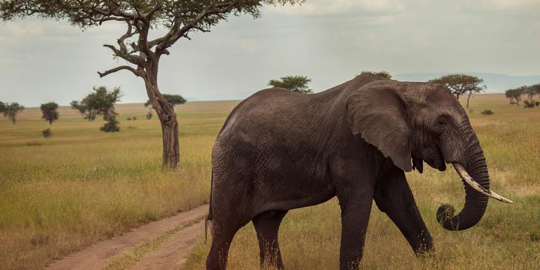 Günstige Kenia Gruppenreisen für 18 - 39 jährige 2019 ab € 1987.0 | Erlebnisrundreisen.de