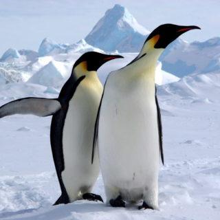 Rundreise Antarktis - Antarktis mit Falkland-Inseln und Südgeorgien 2019