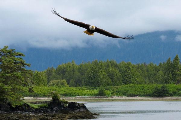 Alaska-Alaskas-Ruf-der-Wildnis