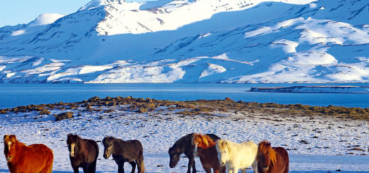Winterstimmung in Island - Reinhard Pantke - © Reinhard Pantke