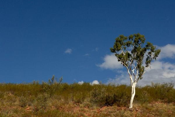 Australien-Wüstenabenteuer-Larapinta-Trail-1