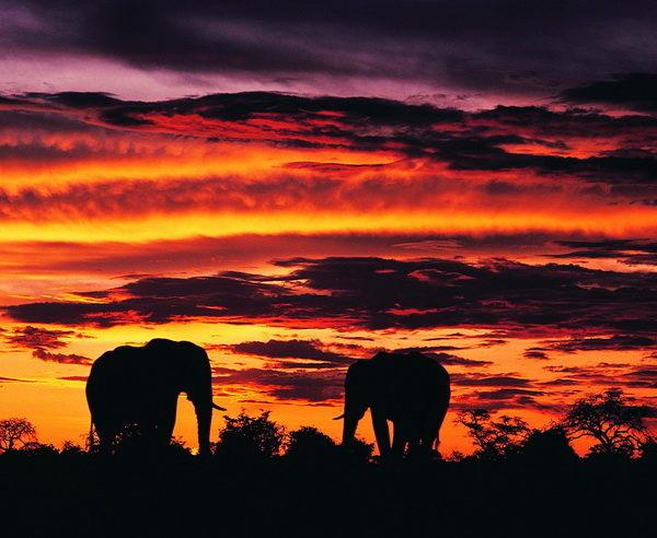BW-Südafrika-Botswana-Simbabwe-Untouched-3