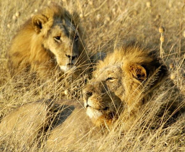 BW-Südafrika-Botswana-Simbabwe-Untouched-4