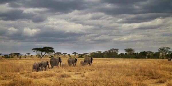 Classic-Masai-Tanzania-Camping-Safari
