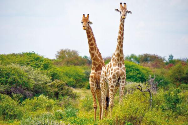 Dr.-Tigges-Studienreise-Die-Höhepunkte-Namibias