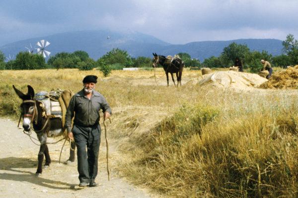 Dr.-Tigges-Studienreise-Minoische-Impressionen-Kretas