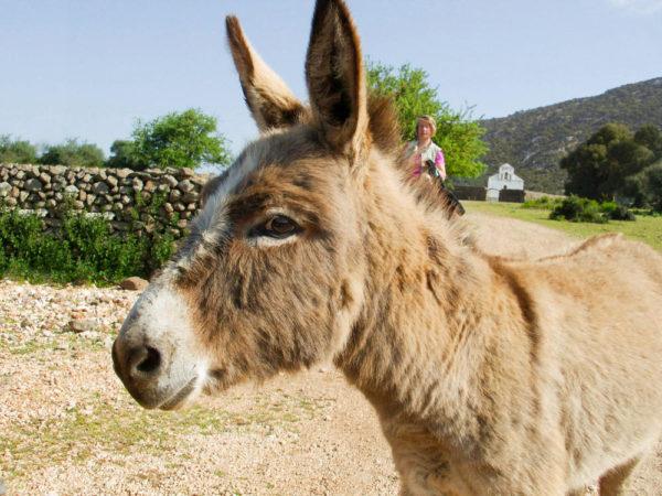 Esel Supramonte - Beate Goj