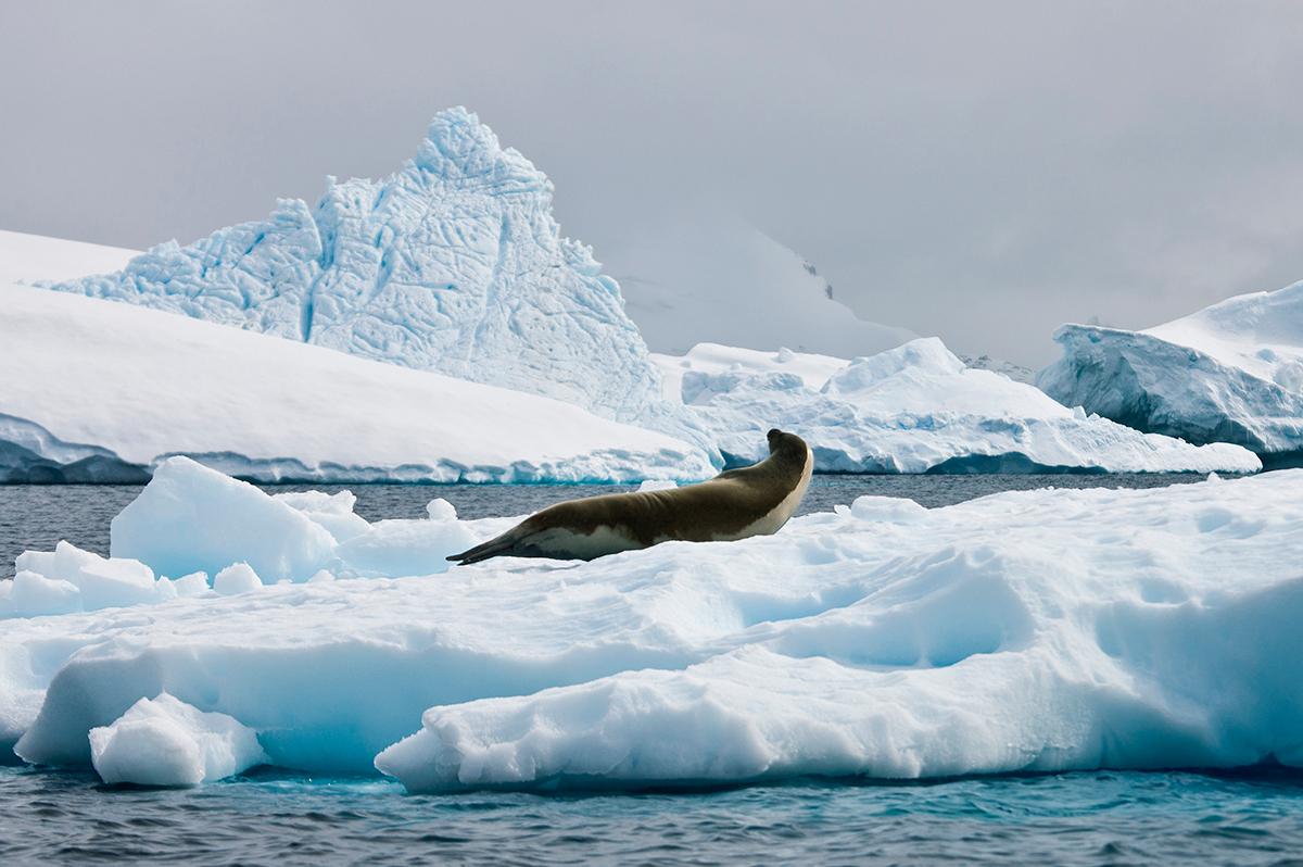 Die Wunder der Natur auf Grönland | Erlebnisrundreisen.de