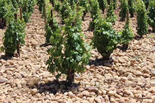 Wein aus der Provence 2019 | Erlebnisrundreisen.de