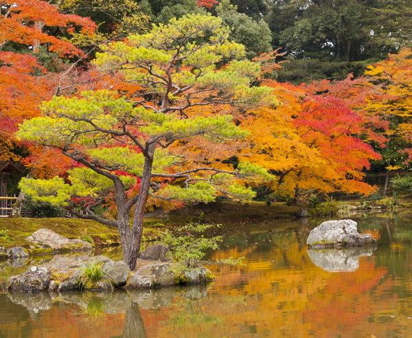 Japanischer Garten im Herbstkleid in Kyoto