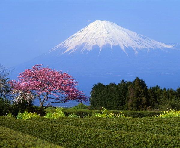 Der Berg Fuji zur japanischen Pflaumenblüte