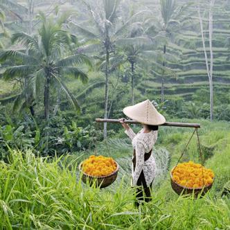 Java-–-Bali-Rundreise-3