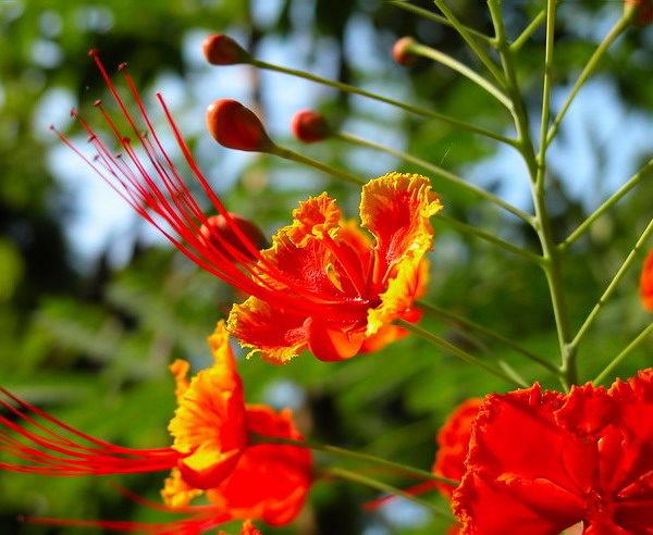 Tropische Blüten