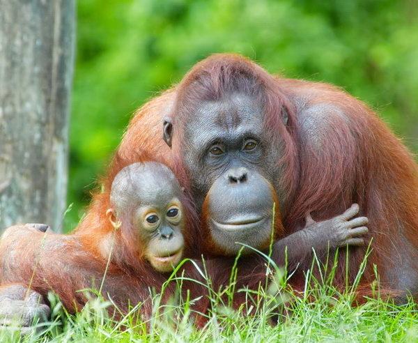 MY-Malaysia-Borneo-Sinfonie-tropischer-Grüntöne-4