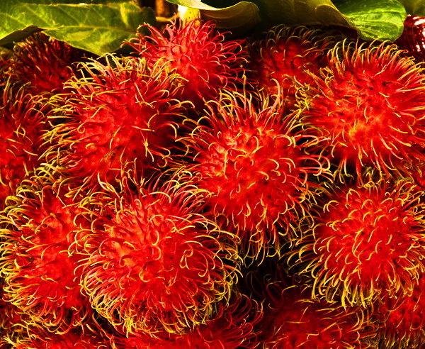 MY-Malaysia-Borneo-Sinfonie-tropischer-Grüntöne-5