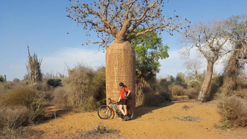 Baobab in der Nähe von Tulear - Martin Müller (Natur Bike SL)