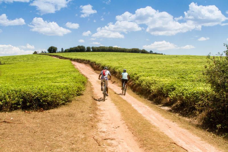 Teeplantagen bei Sahambavy - Martin Müller (Natur Bike SL)