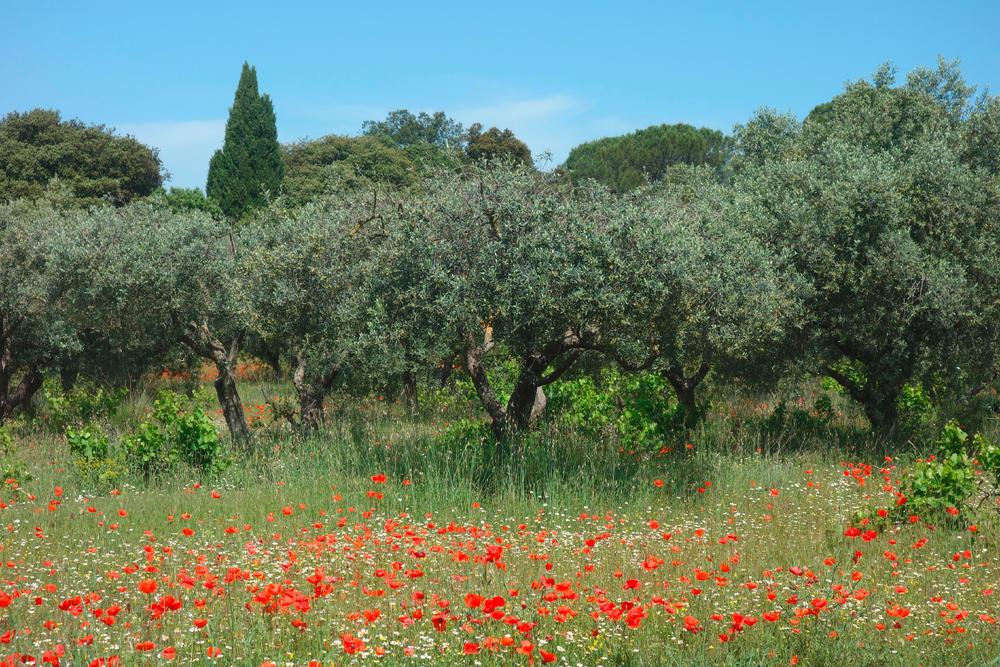 Blühende Provence - Bettina Forst