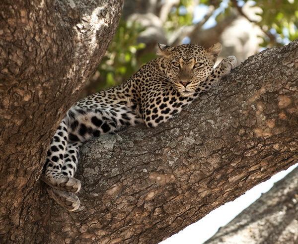 Rundreise Tansania - Safari-Erlebnis im Norden 2019