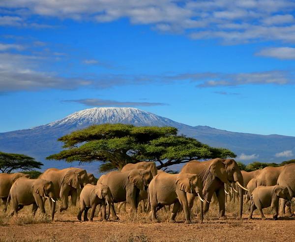 Rundreise Tansania - Safari und Sansibar 2019