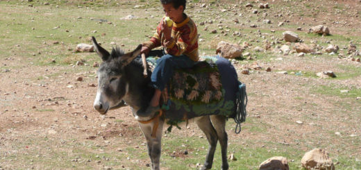 Esel mit Kind im Hohen Atlas - Yvonne Ruppert