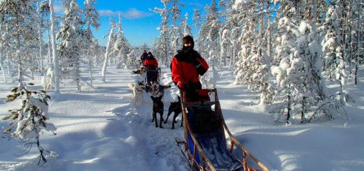 Mit unseren Huskys unterwegs - Lapplands Drag