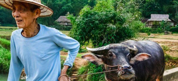 Reisbauer mit Wasserbüffel