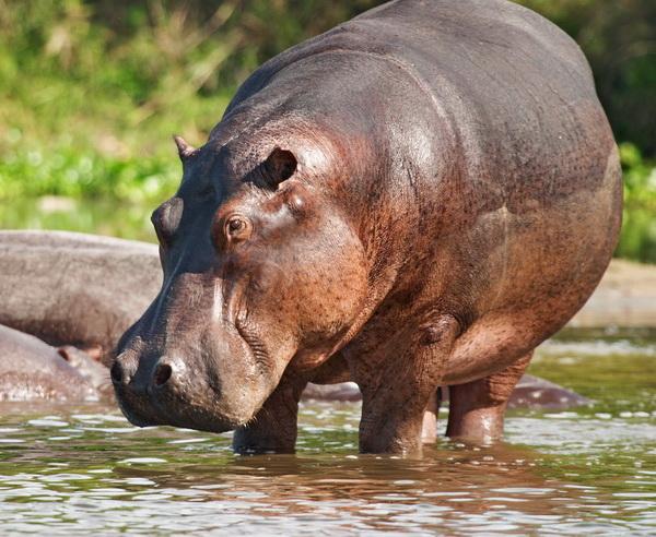 Rundreise Botswana - Wo die wilden Tiere wohnen 2019