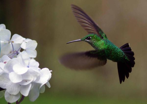 Kolibri - Fritz Fucik