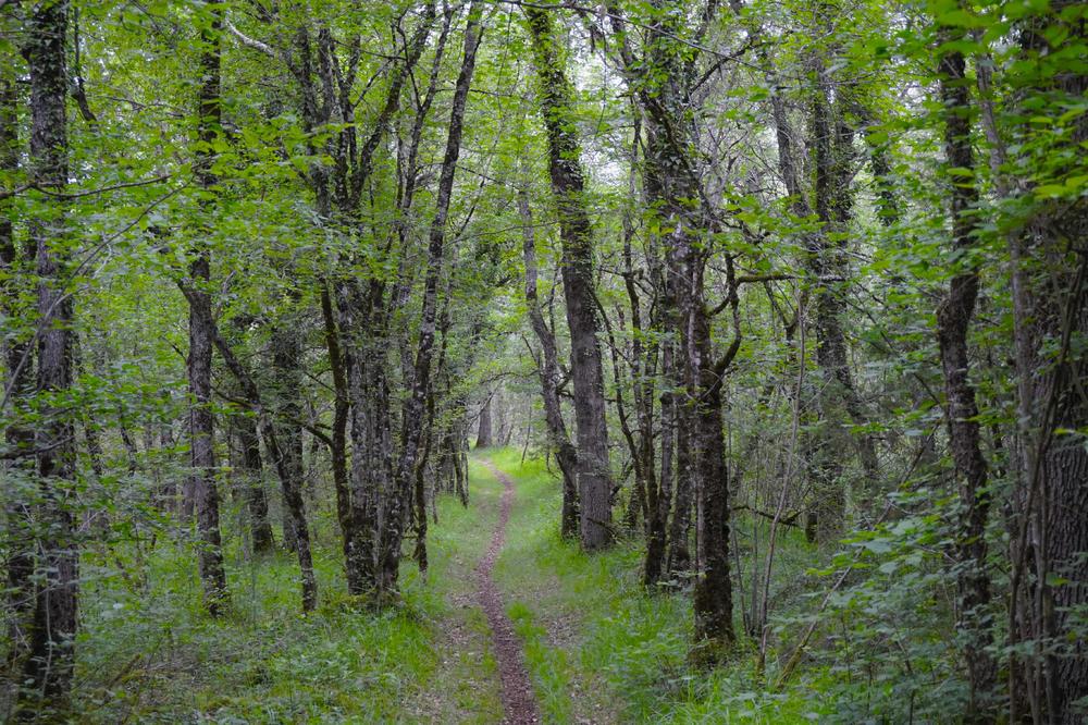 Im Trüffelwald bei Gabillou - Carmen Rameil