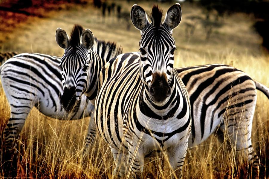 Flugsafari ins Okavangodelta und das Central Kalahari Game Reserve