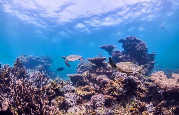 Ausflug am Great Barrier Reef - Katharina Reiter