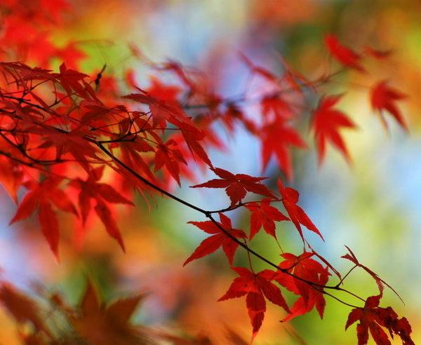 KR-Südkorea-Japan-Von-Morgenstille-zu-Morgenröte-4